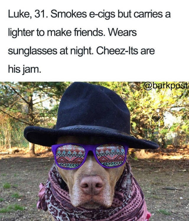 pitbull wearing hat, patterned scarf and patterned glasses Dog Bio Memes - Luke, 31. Smokes e-cigs but caries a lighter to make friends. Wears sunglasses at night. Cheez-Its are his jam @barkpost
