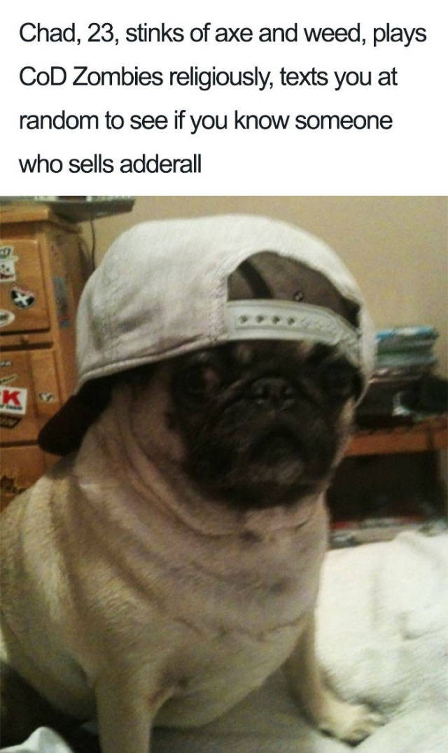 pug wearing backwards cap Dog Bio Memes - Chad, 23, stinks of axe and weed, plays CoD Zombies religiously, texts you at random to see if you know someone who sells adderall K