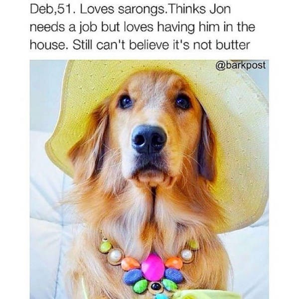 Dog Bio Memes golden retriever wearing wide rimmed floppy hat and colorful necklace
