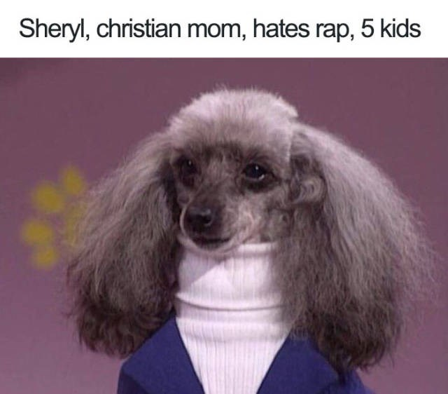 grey dog with frizzy ears wearing white turtleneck and blue jumper Dog Bio Memes - Sheryl, christian mom, hates rap, 5 kids