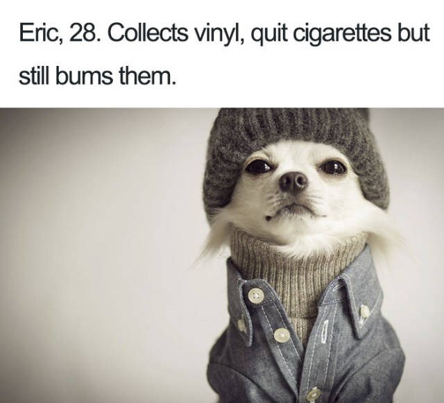 Dog Bio Memes white chihuahua wearing beanie, turtleneck and button up shirt