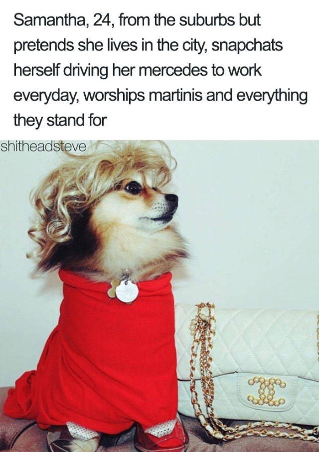 chihuahua wearing red dress with curly blonde wig and gucci handbag Dog Bio Memes - Samantha, 24, from the suburbs but pretends she lives in the city, snapchats herself driving her mercedes to work everyday, worships martinis and everything they stand for shitheadsteve