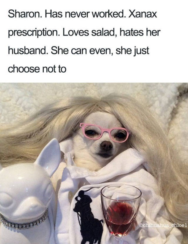 white chihuahua wearing white wig pink glasses with glass of wine Dog Bio Memes - Dog - Sharon. Has never worked. Xanax prescription. Loves salad, hates her husband. She can even, she just choose not to @chihuahua chloel