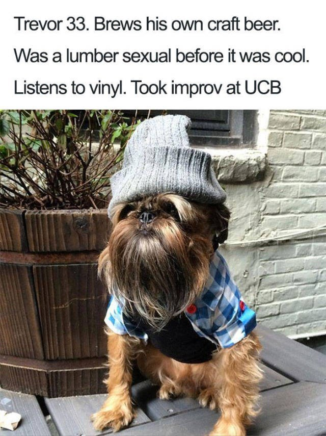 terrier dog with long face hair wearing beanie and checked shirt Dog Bio Memes - Trevor 33. Brews his own craft beer. Was a lumber sexual before it was cool. Listens to vinyl. Took improv at UCB