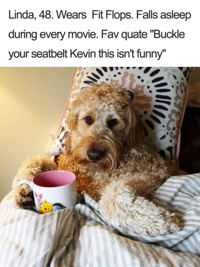 "curly dog tucked in bed with cup of tea Dog Bio Memes - Linda, 48. Wears Fit Flops. Falls asleep during every movie. Fav quate ""Buckle your seatbelt Kevin this isn't funny"""