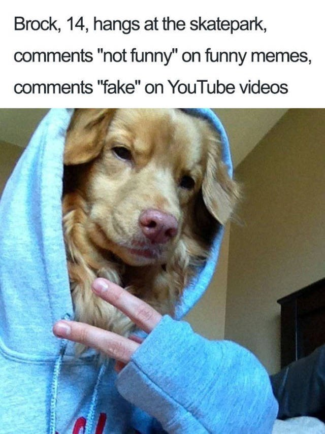 "dog wearing blue hoodie making peace sign with human hand Dog Bio Memes - Brock, 14, hangs at the skatepark, comments ""not funny"" on funny memes, comments ""fake"" on YouTube videos"