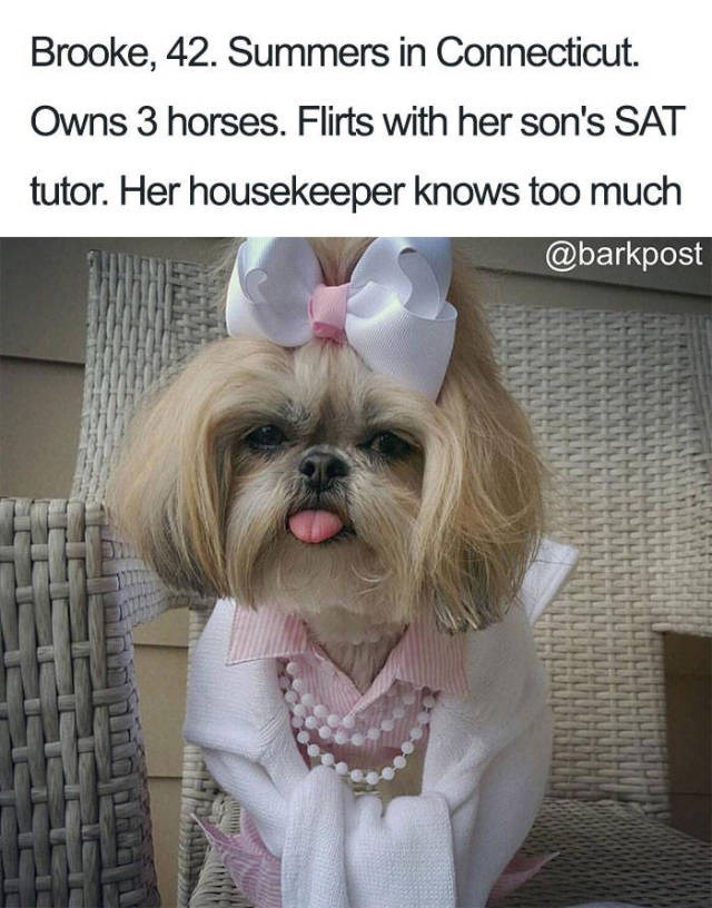 yorkshire terrier wearing white bow in hair pink shirt pearls and white jumper Dog Bio Memes - Brooke, 42. Summers in Connecticut Owns 3 horses. Flirts with her son's SAT tutor. Her housekeeper knows too much @barkpost