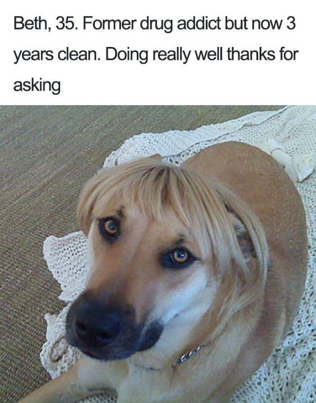 dog wearing blonde wig Dog Bio Memes - Beth, 35. Former drug addict but now 3 years clean. Doing really well thanks for asking