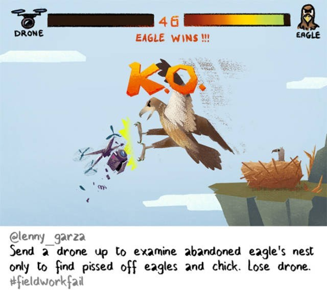 Cartoon - 46 DRONE EAGLE EAGLE WINS!!! elenny_garza Send a drone up to examine abandoned eagle's nest only to find pissed off eagles and chick. Lose drone. fieldworkfail