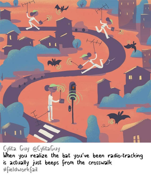 Illustration - Hyt Cylita Guy eCylitaGuy When you realize the bat you've been radio-tracking is actually just beeps from the crosswalk #fieldworkfail