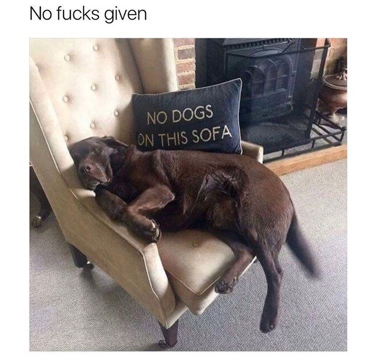 Dog on a sofa chair that clearly has a pillow saying NO DOGS ON THIS SOFA