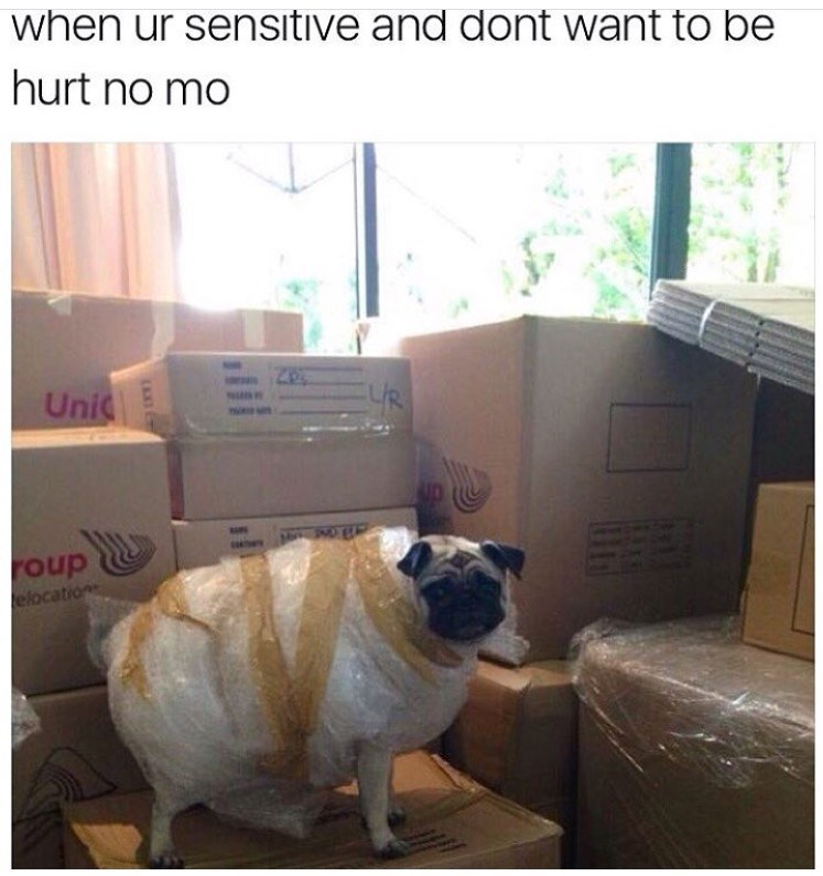 Funny pic of Pug in bubble wrap because he is so sensitive.