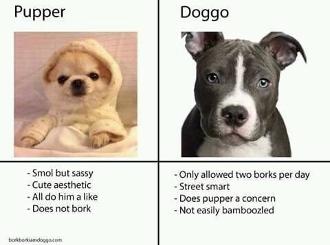 Doggo VS Pupper meme