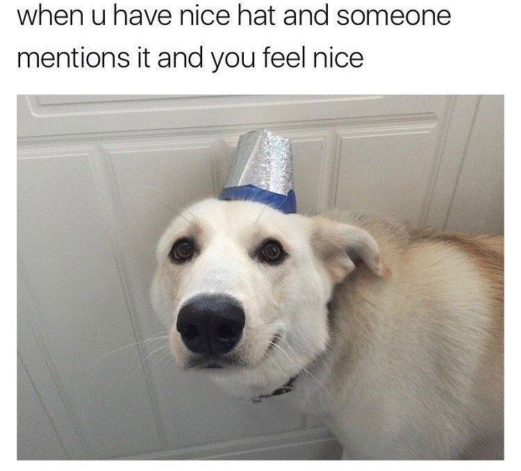 Dog with a nice hat and how it feels when someone tells you your hat is nice.