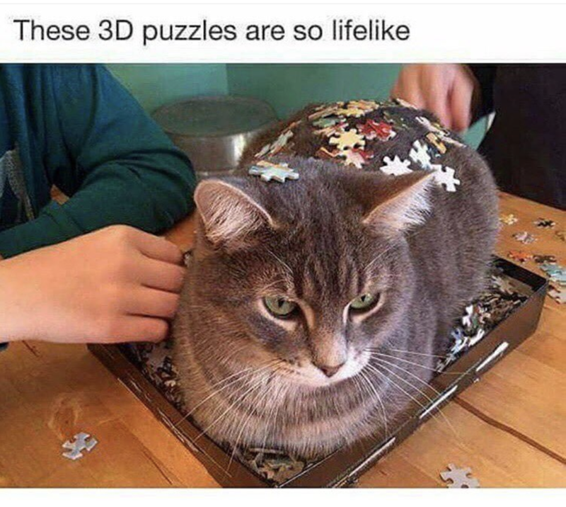 Cat sitting on a 3D puzzle