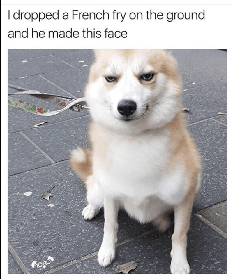 Dog face for when you drop a French fry on the ground.