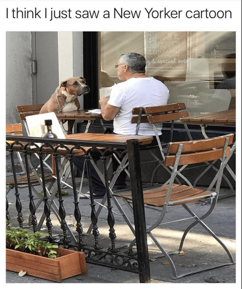Man and dog having food at a cafe in NY
