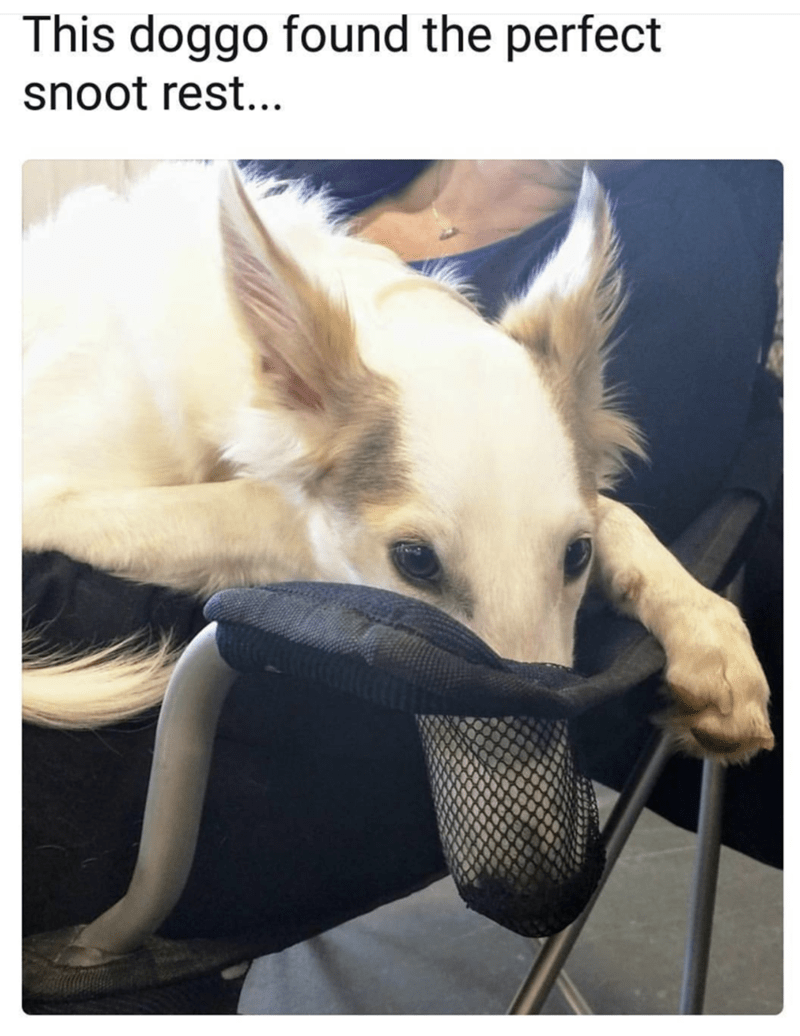 Doggo meme about the perfect foot rest.