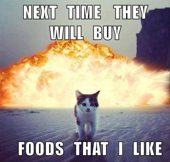 revenge cat - Cat - NEXT TIME THEY WILL BUY FOODS THAT I LIKE