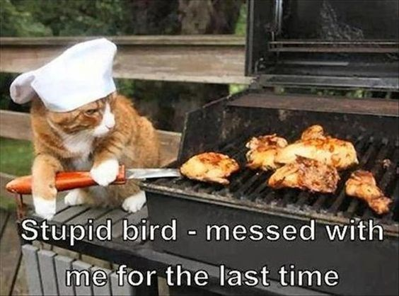 revenge cat - Grilling - Stupid bird messed with merfor the last time