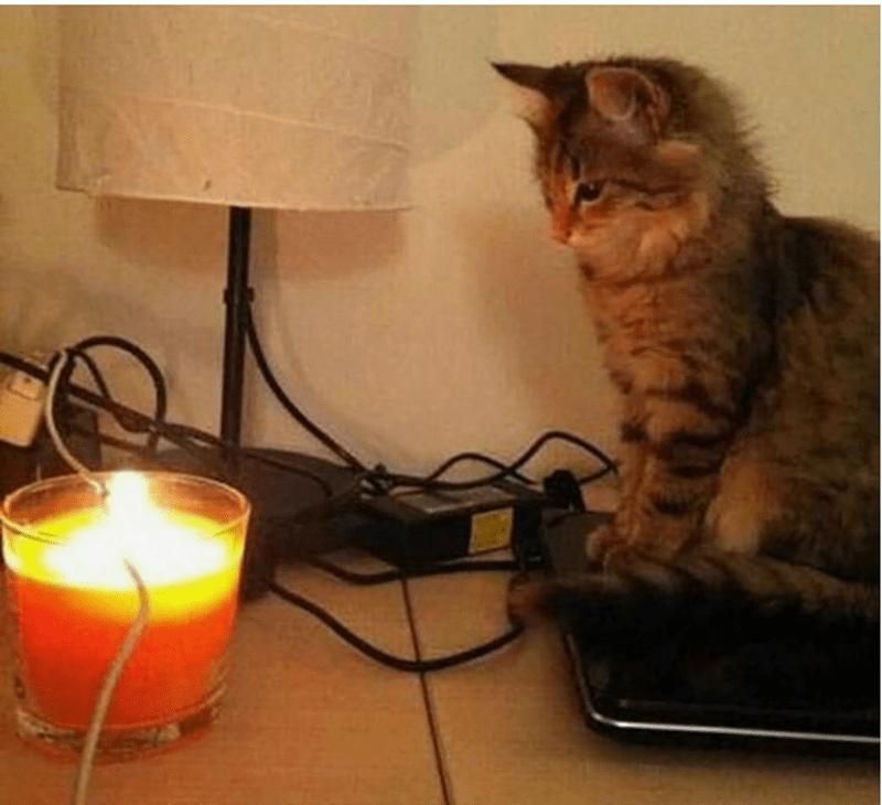 revenge cat - Cat