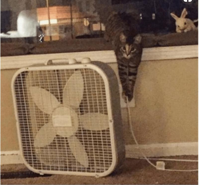revenge cat - Product