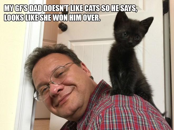 Cat - MY GFS DAD DOESNTLIKE CATS SOHESAYS LOOKS LIKESHE WON HIM OVER