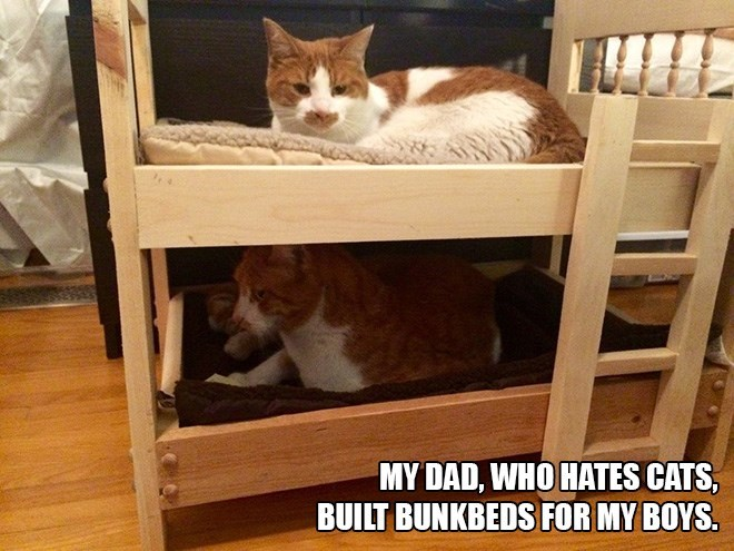 Cat - MY DAD, WHO HATES CATS, BUILT BUNKBEDS FOR MY BOYS
