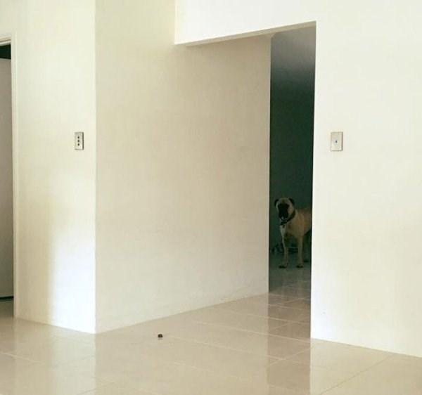 stalker dog - Property - ..