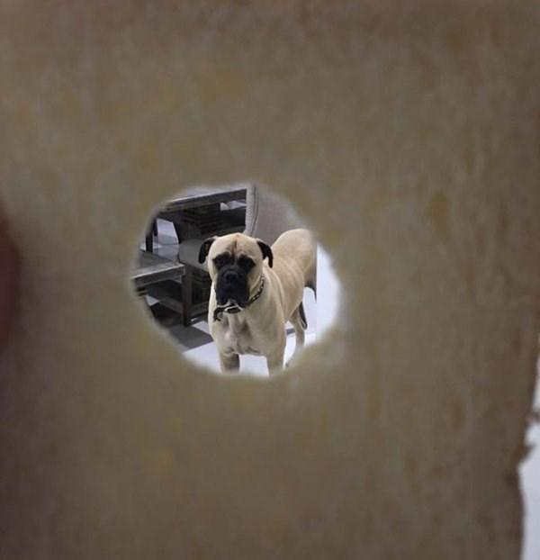 stalker dog - Dog
