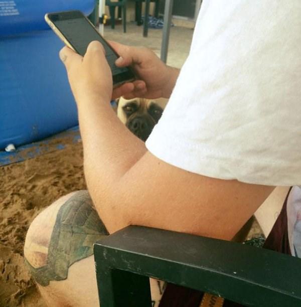 stalker dog - Arm - UN