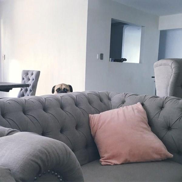 stalker dog - Furniture