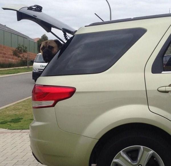 stalker dog - Land vehicle - Chen