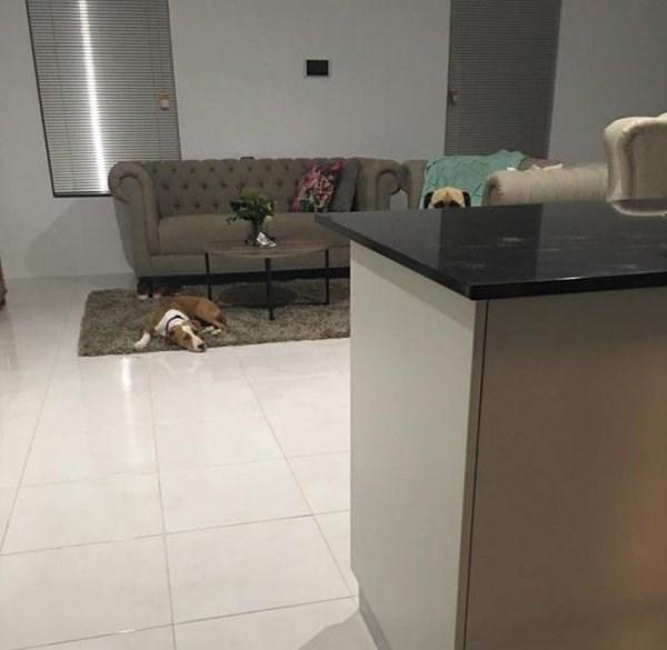 stalker dog - Floor