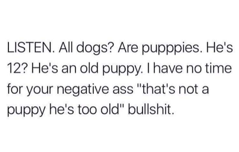 Dog is always a big puppy, got it?