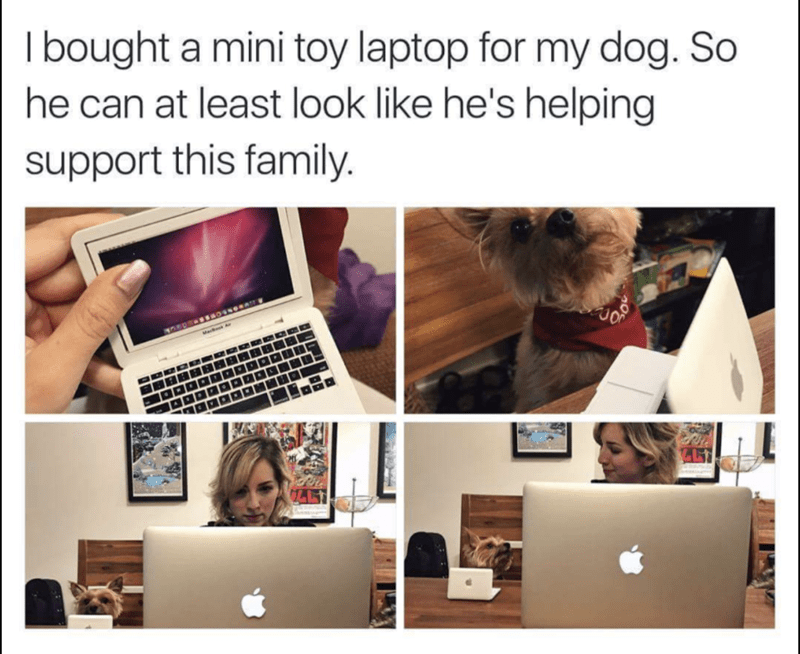 mini laptop for the dog so he feels like he is being busy.