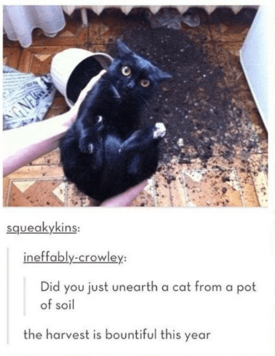 Black cat - GNE squeakykins: ineffably-crowley: Did you just unearth a cat from a pot of soil the harvest is bountiful this year