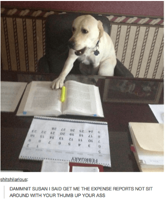 Canidae - 9 s E ANRBBR shitshilarious: DAMMNIT SUSAN I SAID GET ME THE EXPENSE REPORTS NOT SIT AROUND WITH YOUR THUMB UP YOUR ASS