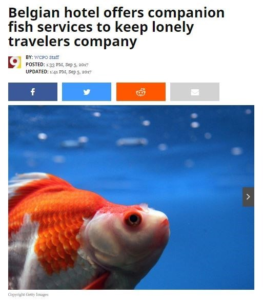 Headline about Belgian hotel offering companion fish to keep lonely travelers company.