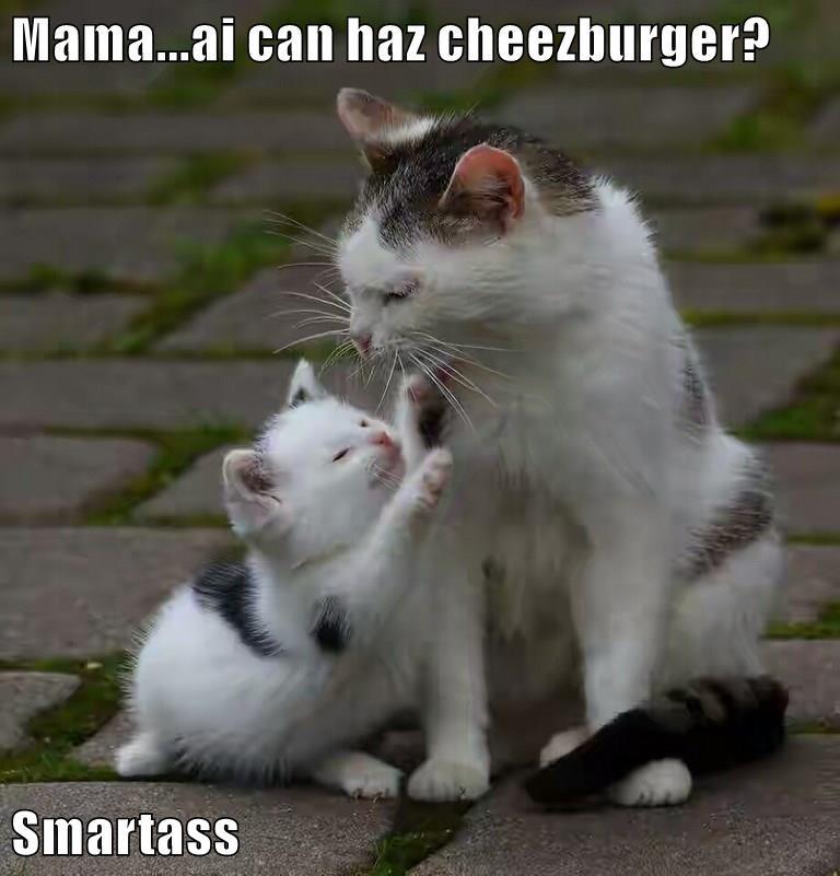 Cheezburger Image 9072738304