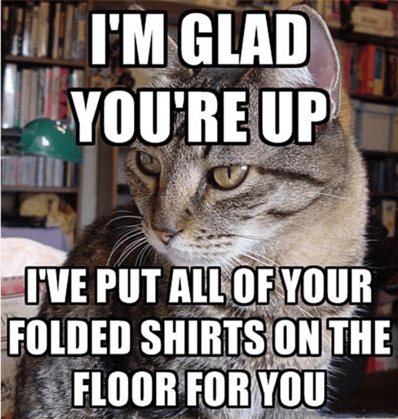 Memes Cats funny - 9072772608