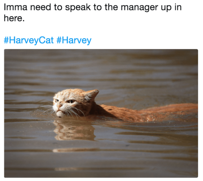 Cat - Imma need to speak to the manager up in here. #HarveyCat #Harvey