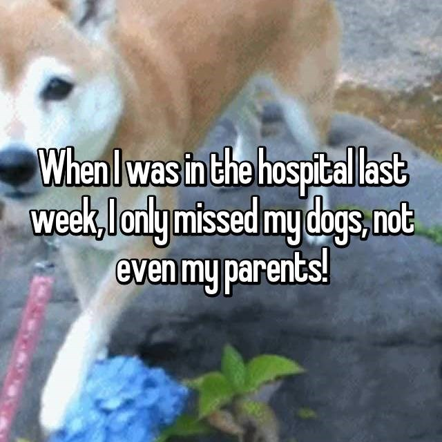 When I was in the hospital last week, i only missed my dogs, not even my parents!