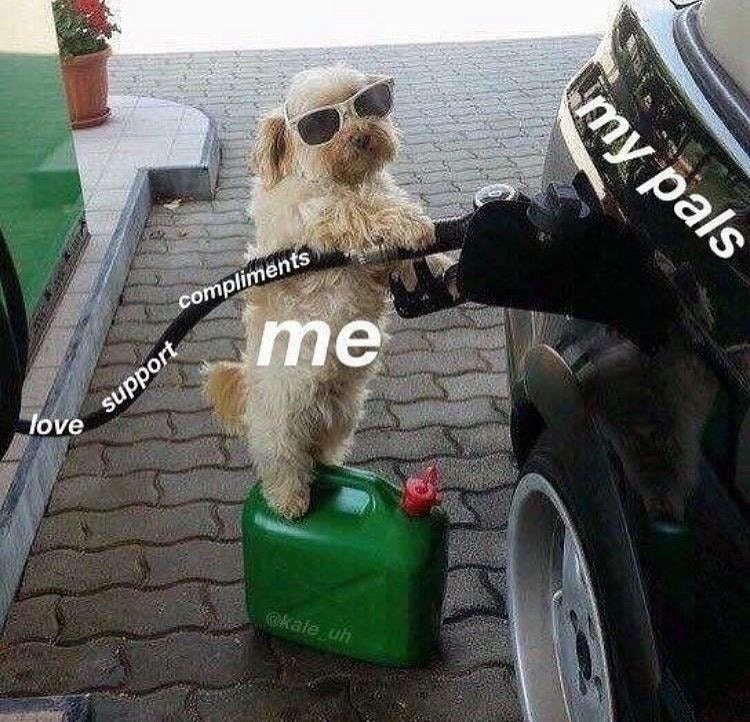 Wholesome meme of dog filling car, metaphor for supporting ones friends.