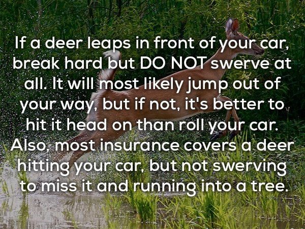 Vegetation - If a deer leaps in front of your car, break hard but DO NOT swerve at all. It will most likely jump out of your way, but if not, it's better to, hit it head on than roll your car. Also most insurance covers a deer hitting your car but not swerving to miss it and running into a tree.