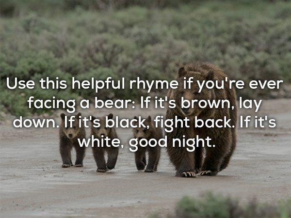 Brown bear - Use this helpful rhyme if you're ever facing a bear: If it's brown, lay down. If it's black. fight back. If it's white, good night.