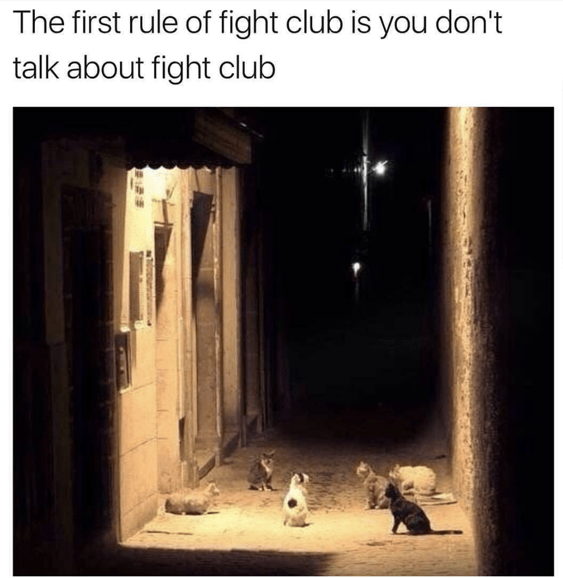 Very funny cat meme that is fairly conclusive that they are forming a fight club