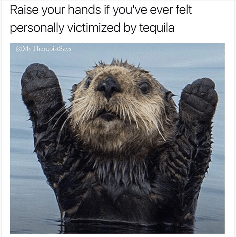 Funny meme of otter raising his hands because he was once personally victimized by tequila