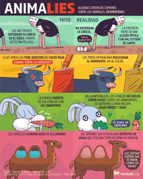 vineta sobre los mitos y realidades del mundo animal