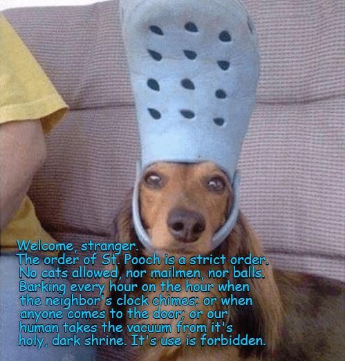 Cheezburger Image 9073293312